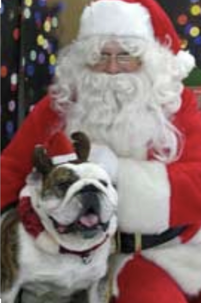 The secret is out, it's actually Cache Bulldogs that powers Santa's sleigh!